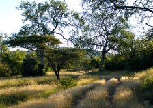 Mluwula reserve. Photo Credit: http://www.thekingdomofswaziland.com/pages/attractions/the_attraction.asp?AttractionsID=40