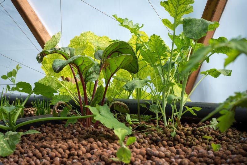 «Nullkilometer»-Gemüse aus dem Aquaponik Geodome