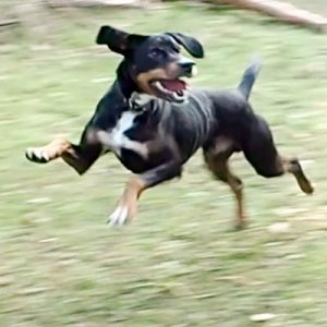 dog-flying-2