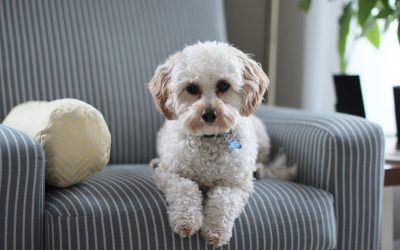 Sole Custody of the Dog…is that a Thing?