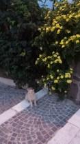 kitty-flowers-venafro