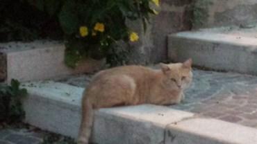 kitty-venafro