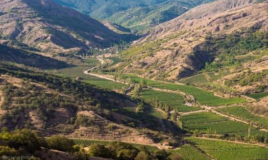crimea-vineyards