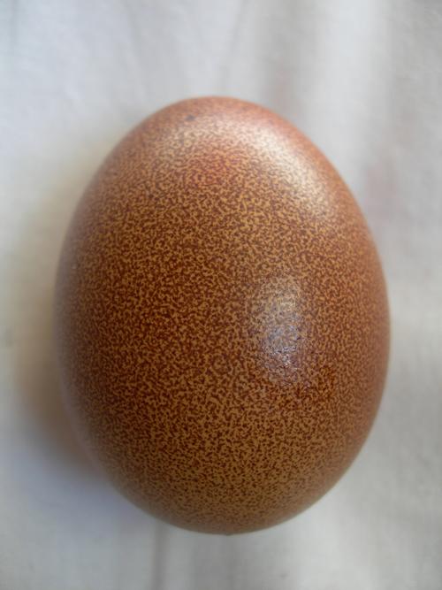 egg-maran