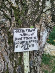Tree planted by PM Anthony Eden after Suez crisis in 1956.