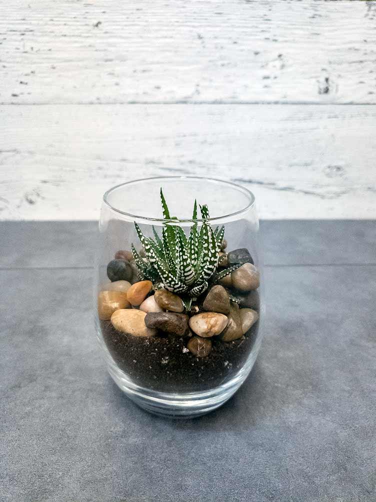 Succulent en verre - Fleuriste Coin Vert
