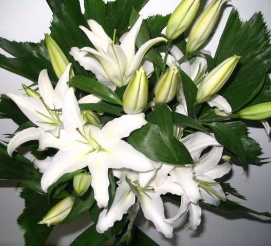 Fleuriste Lasalle Florist Nini Fleuriste Nini Florist