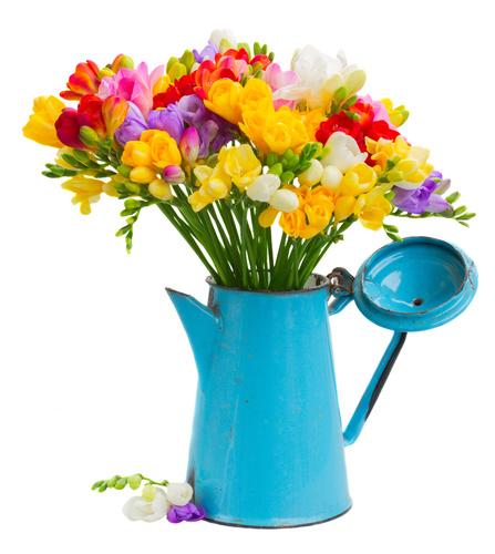 la fleur de freesia par fleuristes et fleurs