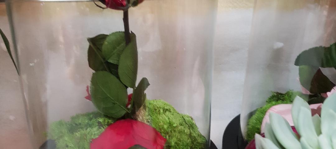 Envoyer des fleurs à Malakoff avec votre fleuriste L'Ile aux Marguerites