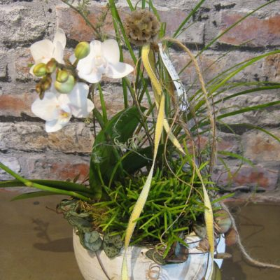 B.cornut Fleuriste Petite Surprise Orchidée Rose