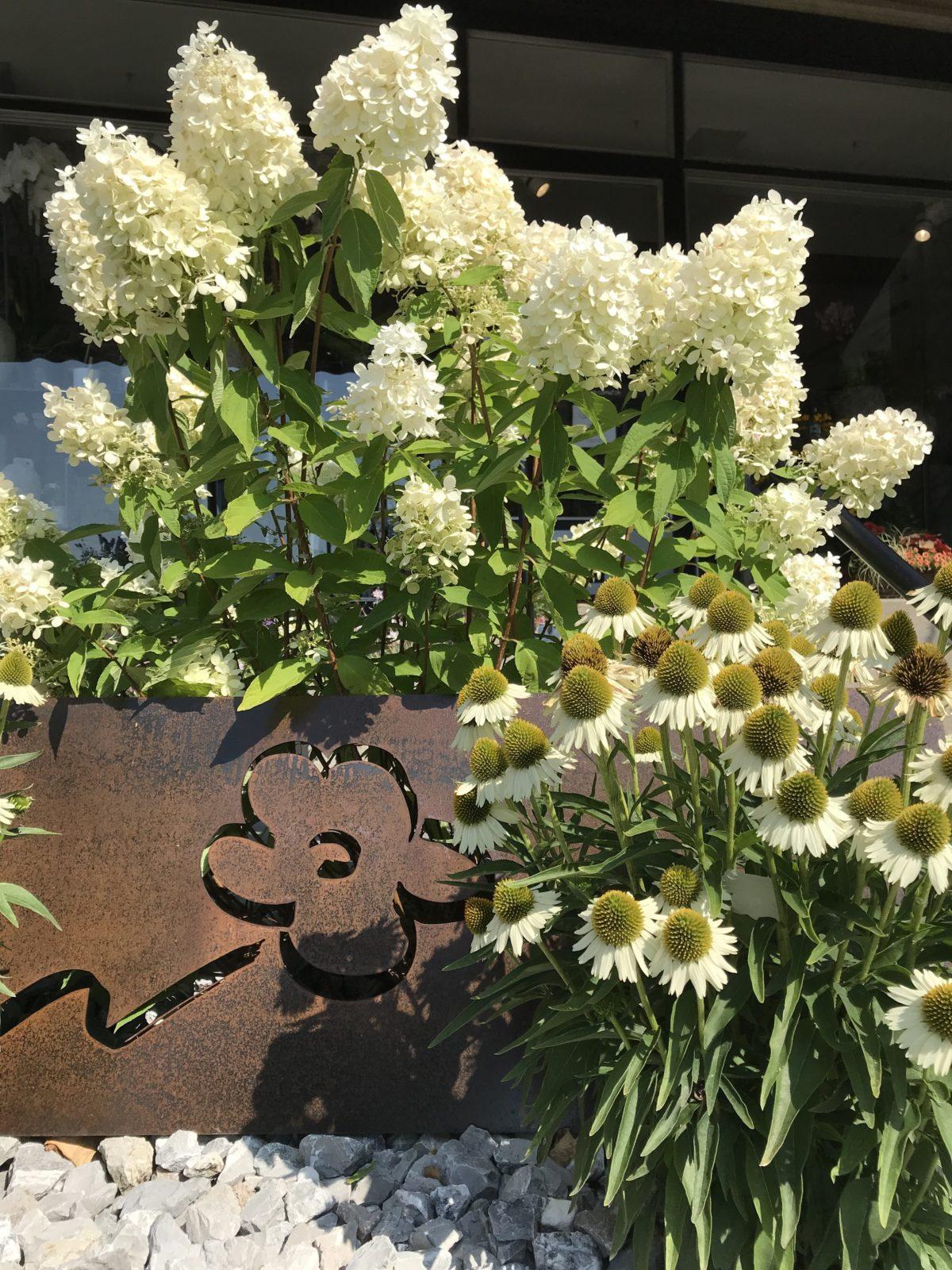 Fleurs Cornut - Av. de Channel 1 - Morges