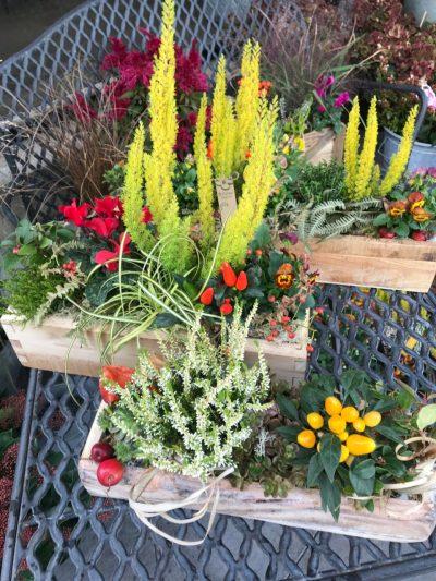 B.Cornut Fleuriste - jardin d'extérieur automnal