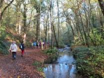La randonnée du 9 novembre à Grimbosq