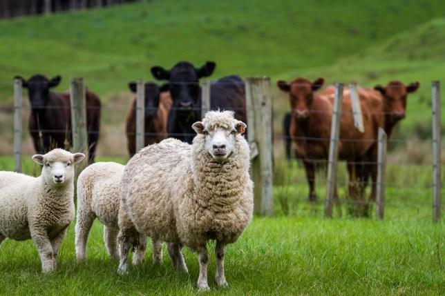 flexi-funding-pastures.jpg