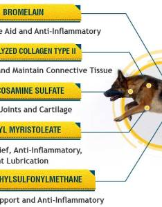 Sec dogbenefits mobilev also aspirin for dogs important dosage and safety information rh flexpet