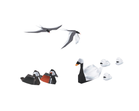 Shelter 2 - Birds
