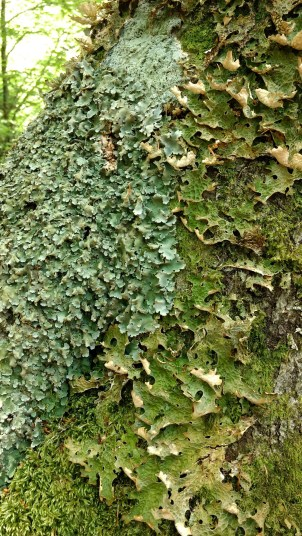 More lichen and wood