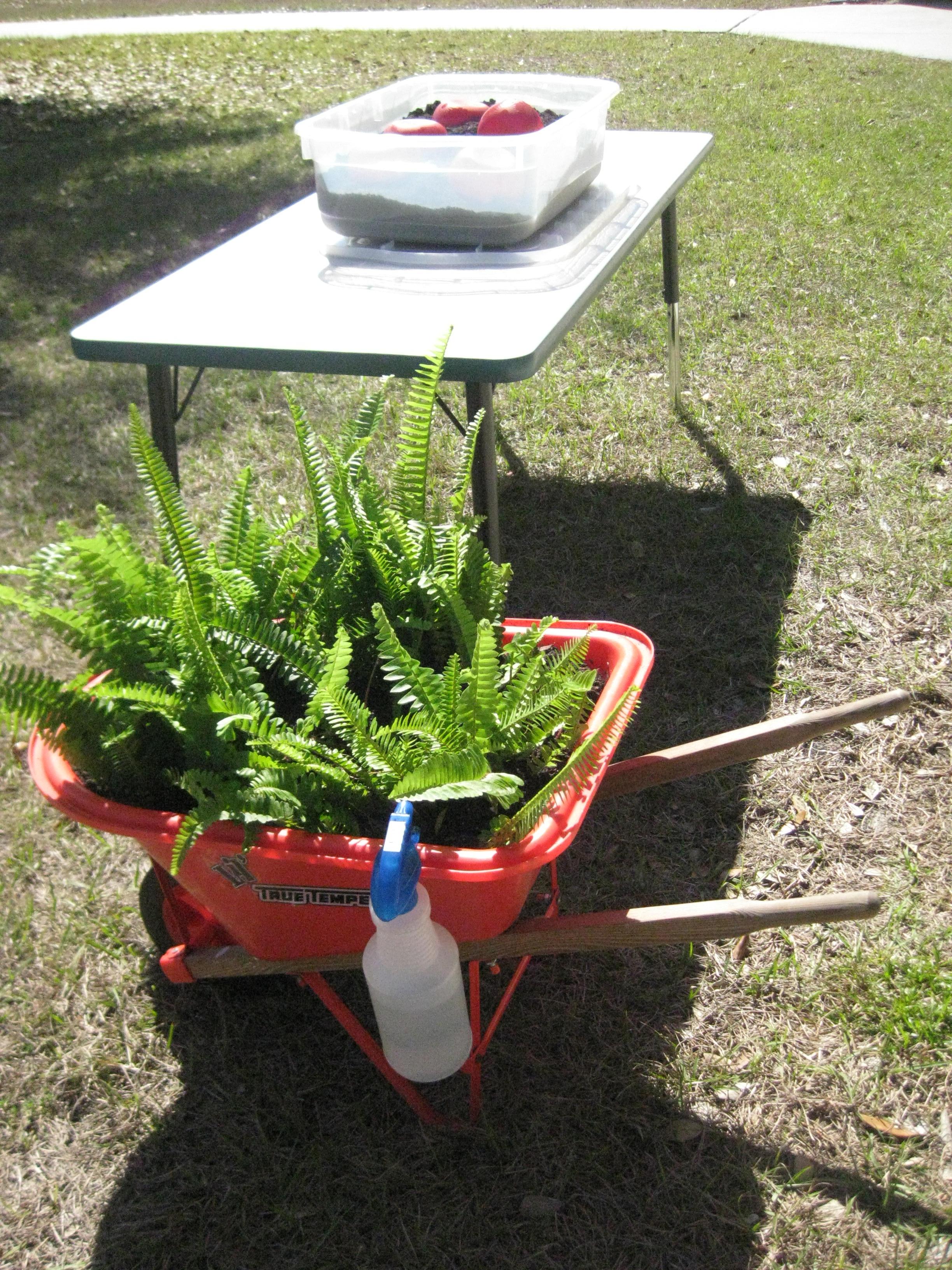 Gardening Lessons At School