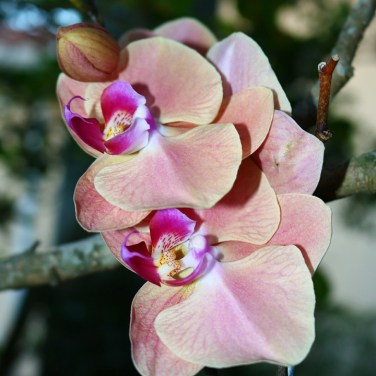 Orchid_shot1