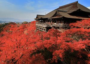 京都旅行 安い