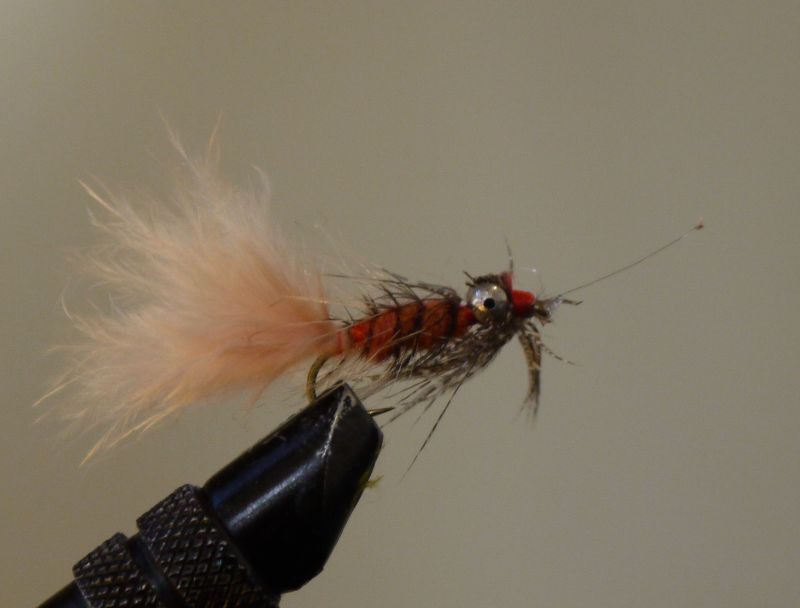 """Old grey beard"" This exact fly has so far accounted for 2 carp. I dare say that will probably be it for old grey beard"
