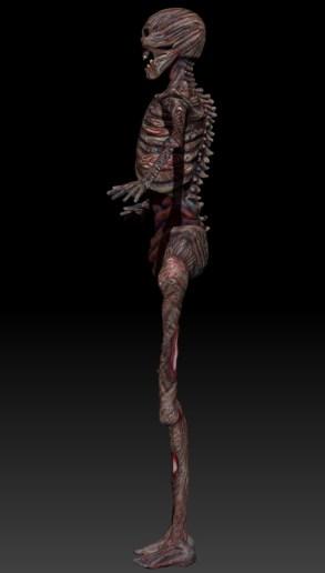skeletoncolor_side