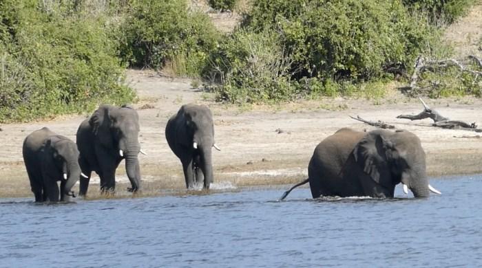 Eelephants