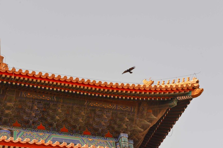 Bird flying over the Imperial Palace