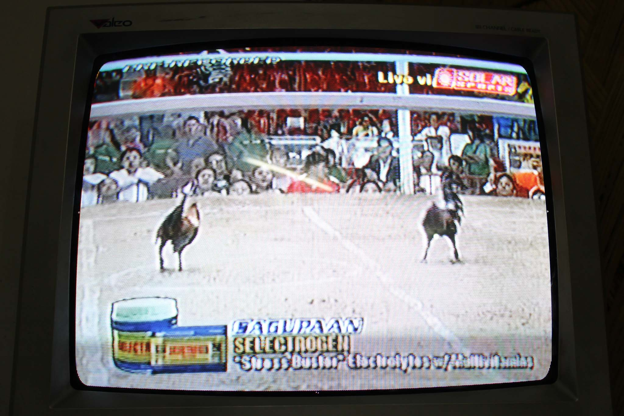 Rooster_Fighting_Philippines_05