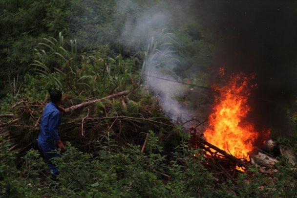 Next door neighbors burning the forest down