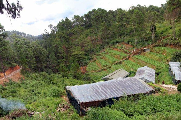 Pine Trees & Cool Weather in Da Lat, Vietnam