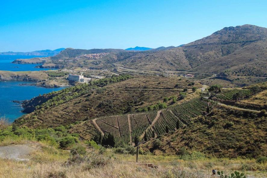 Coastal French Vineyards