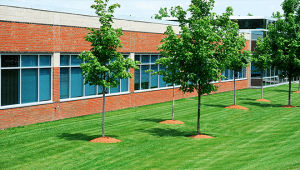 A lawn next to a commercial building.