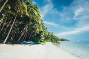 Beach with palm trees in Philippines