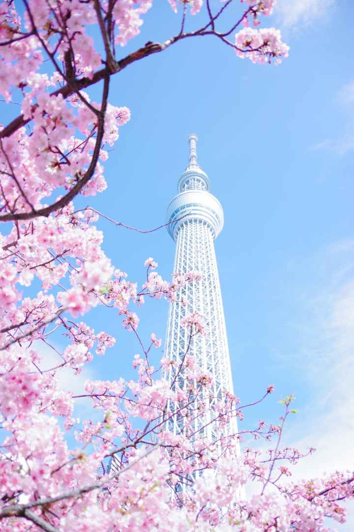 Fly to Tokyo from $81 roundtrip