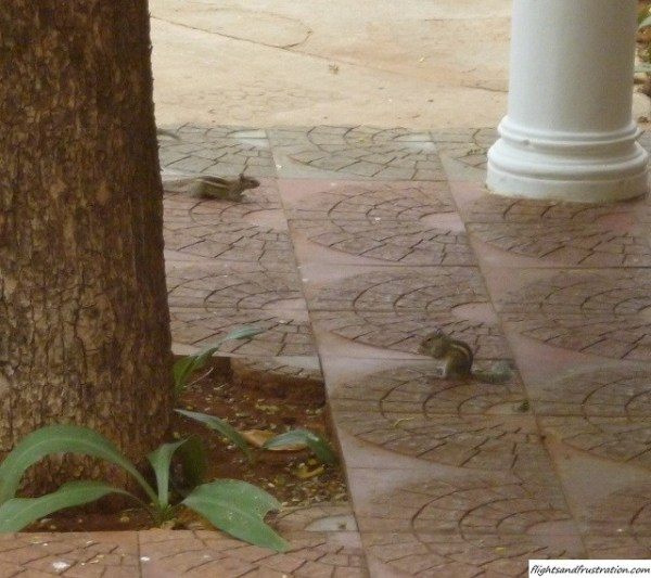 Squirrels can be found all over the hotel grounds