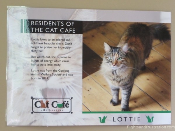 Posters help you identify the cats who live in the Cat Cafe Melbourne