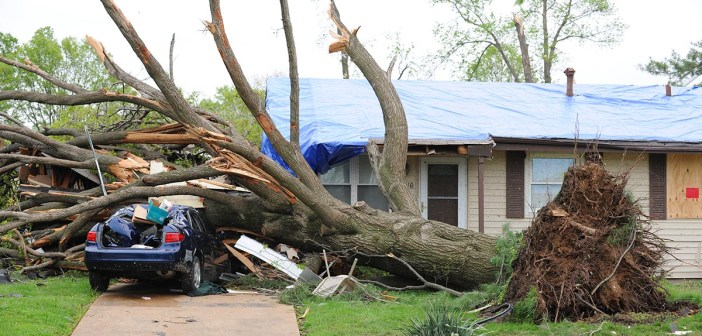 Tree falls on house and car during hurricane storm
