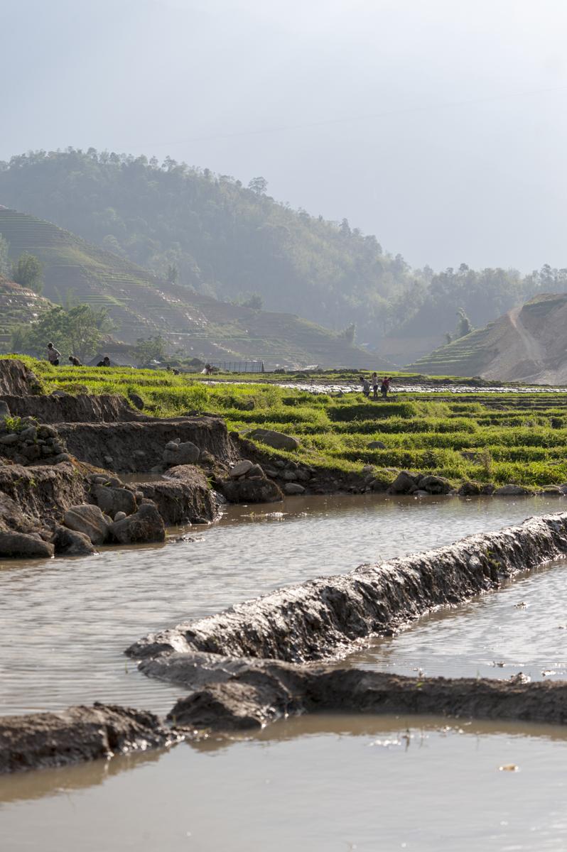 Sapa Empty Rice Ponds II