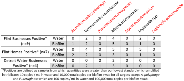 Table 1: Frequency of detection of several Opportunistic Pathogens (shown in red) and additional microbes of interest that are not necessarily pathogenic (shown in black)
