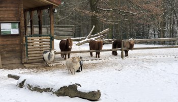 Tierpark Gera 6