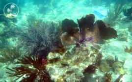 Along the underwater snorkel trail