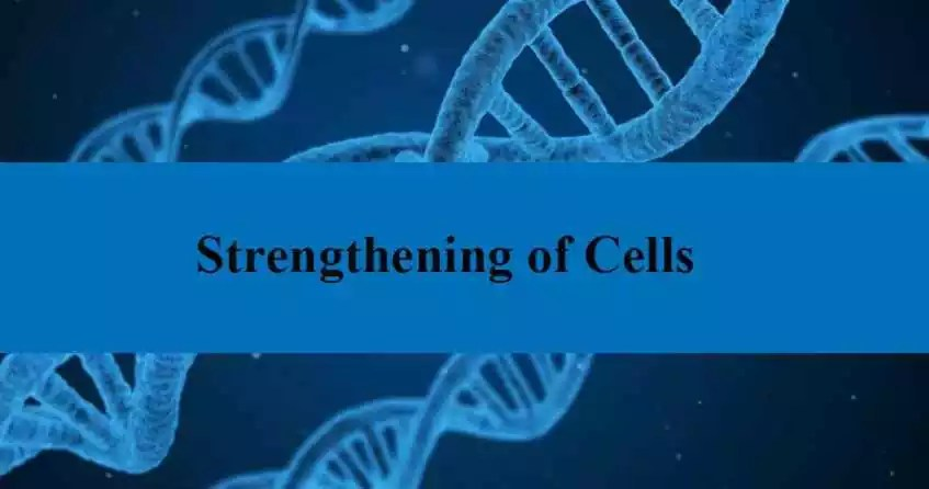 Strengthening of cells