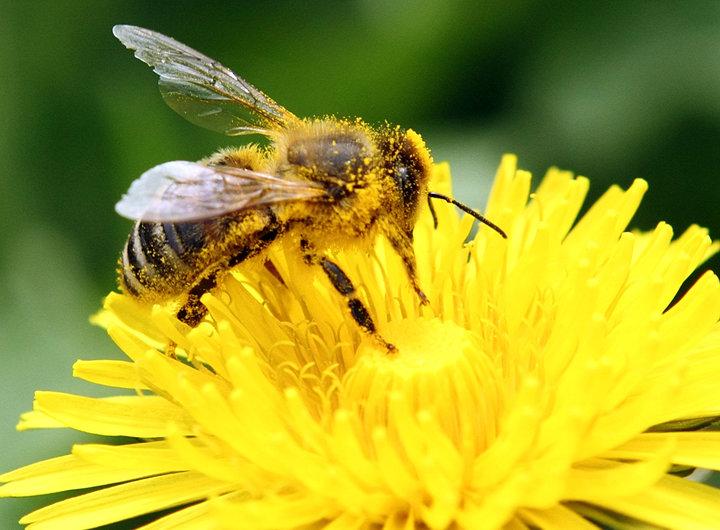 breastmilk-to-heal-bee-stings