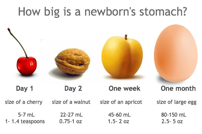 How-big-is-a-newborns-stomach