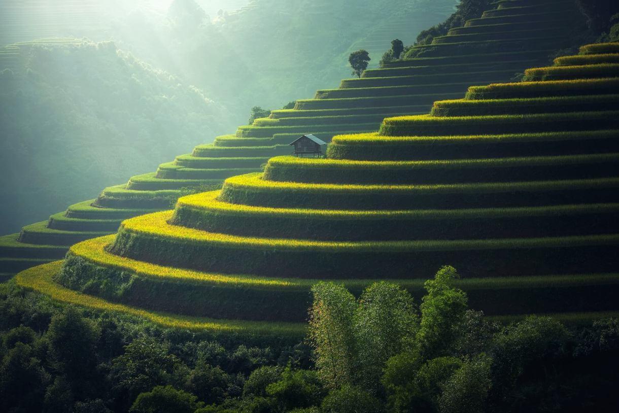 rice-plantation-Bali-Indonesia