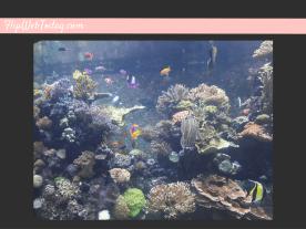 sea-aquarium-5