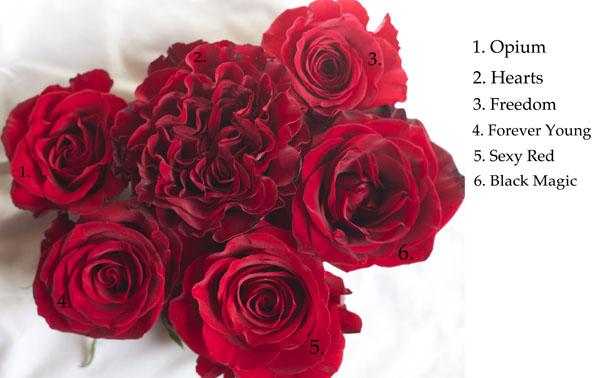 The Red Rose Study  Flirty Fleurs The Florist Blog