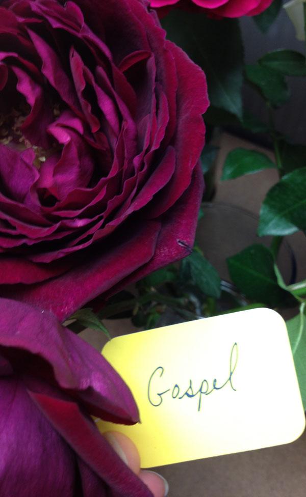 New York Flower District  Harvest Roses  Flirty Fleurs
