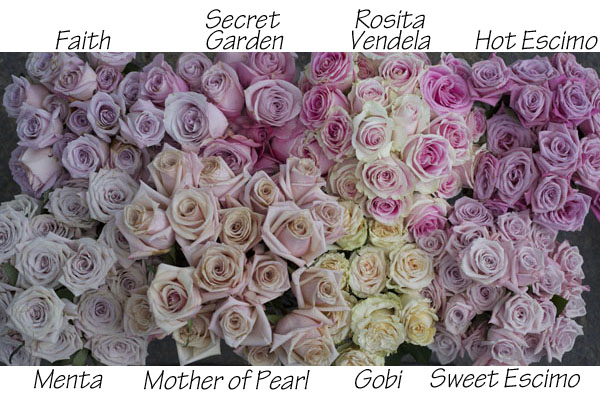 The Blush Rose Study  Flirty Fleurs The Florist Blog